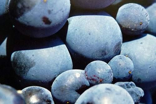 Vino - Experiencia Casa Azul de la Ribera