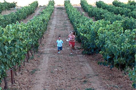 Entorno viñedos - Casa Azul de la Ribera
